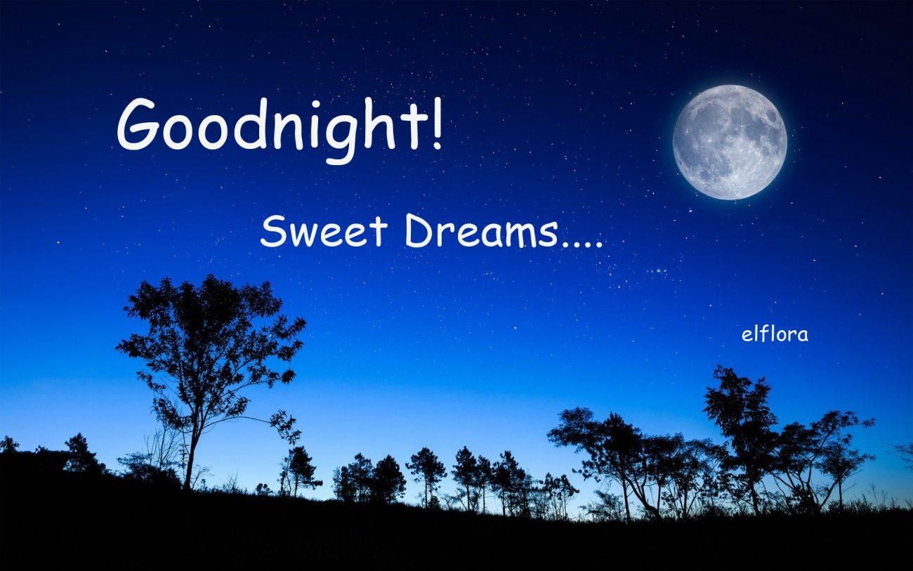 Sweet Dreams » El Flora