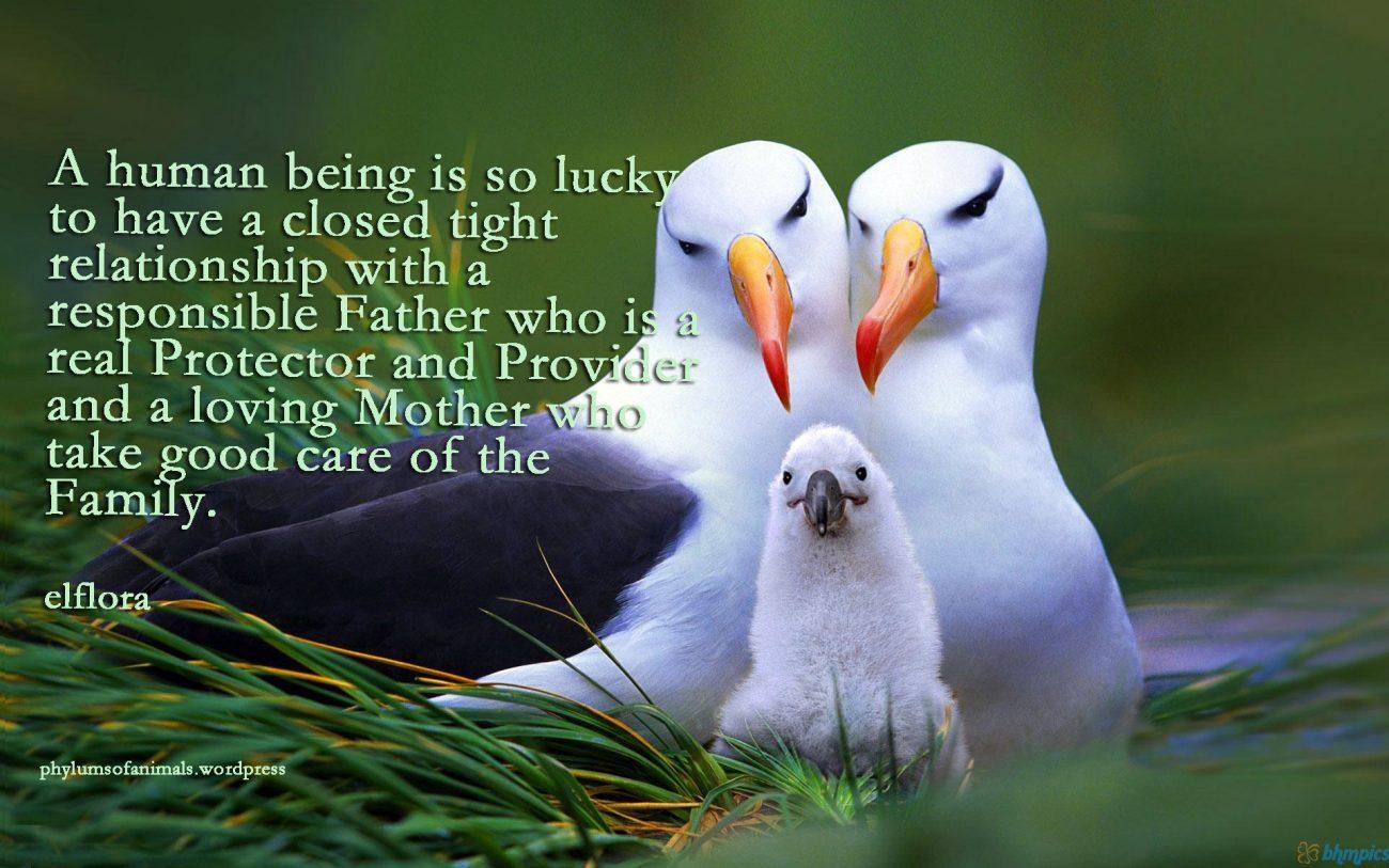 birdsfamily