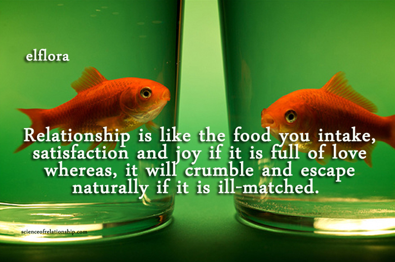 fish-apart