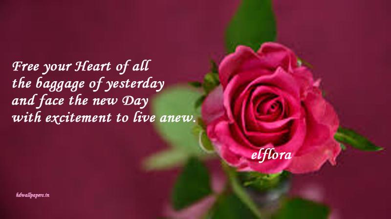 flowerrose
