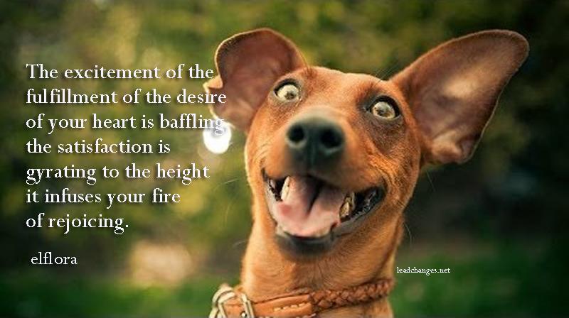 dogexcitement