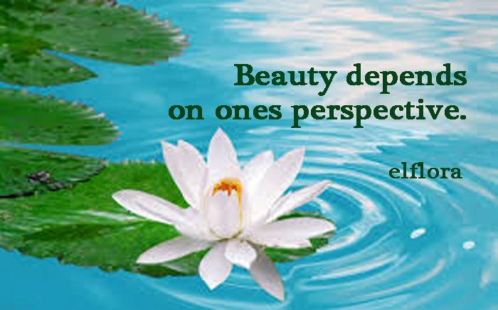 beautyflowerlily