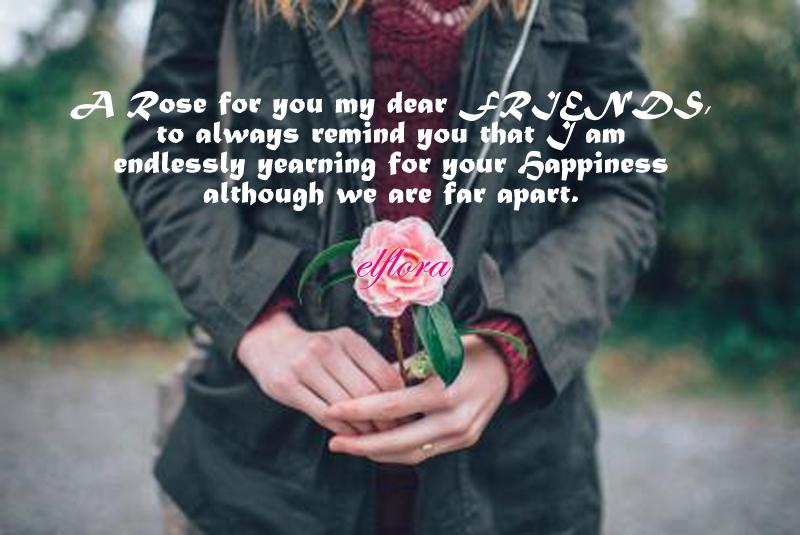 rosefor-you