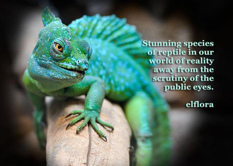 reptilestunning