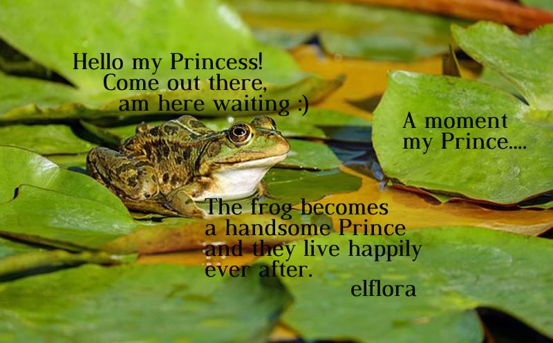 frogsit